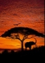 AFRICAN SUNSET Art 4-501