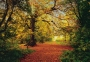 AUTUMN FOREST Art 8-068