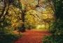 AUTUMN FOREST Art 4-068